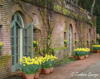 Daffodil  Photography, Flower Photography, Garden Photography, Vintage Photo, Vintage Doors, Daffodil Photo, Spring Photography