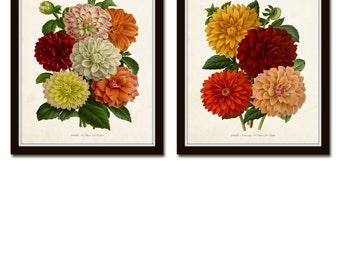 Antique French Dahlias Print Set No. 1, Botanical Prints, Botanical Art, Wall Art, Dahlia, Vintage Botanicals, Giclee, Dahlias, Flower Print