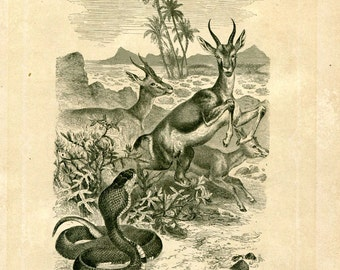 1883 Egyptian Cobra Vintage Print,  Black and White Engraving Brehm Reptiles