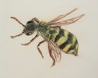 Rare British Bee. Nomad Bee - not a wasp. Drypoint print