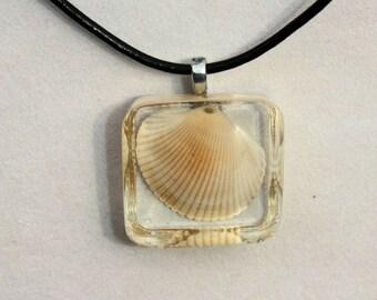 Embedded Florida Shell Resin Pendant, Summer Jewelry, Beach Jewelry, Seashell Jewelry