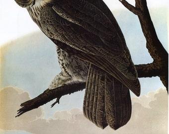 John James Audubon Reproductions - Birds of America, Great Gray Owl [Great Cinereous Owl], 1827-1835. Fine Art Print.
