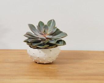 Modern White Planter Ceramic Urchin Planter Ceramic Plant Pot~ White Planter White Plant Pot Ceramic Bowl ~ Pottery Bowl Modern Ring Dish