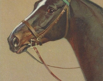 The Rivst D-ring Bay - Vintage 1940s Artist-signed Bridled Horse Postcard