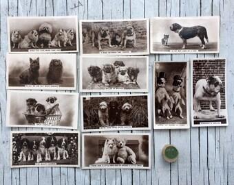 Original vintage Animal Studies cigarette cards, a part set of 11 dog cards. 1930s. Photographic cards.