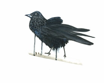 Australian Raven Art,  Raven Illustration, Black Bird Print, Watercolour Bird, Raven Poster, Wildlife Art, Nature illustration