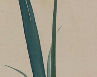 Japanese Fine Art Wall Hanging Scroll Painting Iris and a Beetle Kakejiku - 1505096