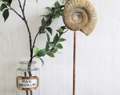 Vintage Ammonite Fossil - Ammonite Fossil on Hewn Stone Base - Mounted Ammonite Fossil - Objet de Trouve - One off Item