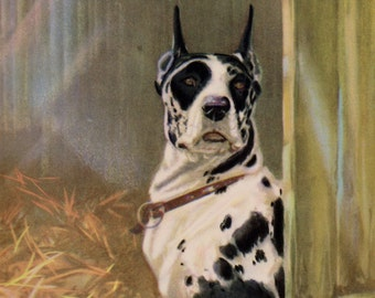 Antique GREAT DANE Dog Print Harlequin Great Dane Dog Art Gallery Wall 1930s Print 2242