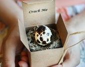 Crack Me! Pregnancy Announcement Quail Egg - Easter - Gender Reveal - Baby Shower Invitation, Custom, Personalized, Unique, Spring