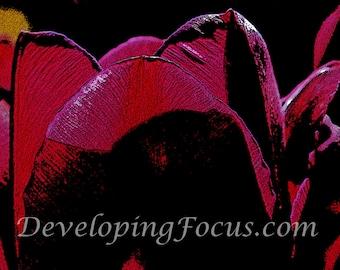 Purple Tulip Digital Art Download, Purple Tulip Digital Photograhy, Digital Art Purple Tulip Card, Digital Photography Tulip Art Print