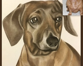 Pet gift/pet birthday gift/ custom portrait/ pet drawing/ portrait from photo/ dog drawing/ memorial pet