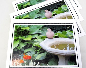 Bird Photo Note Card Set - Set of Four Photo Cards - Garden Note Cards - Set of 4 Blank Note Cards - Blank Cards - Nature Photography