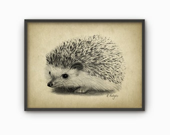 Hedgehog Art Print from Original Drawing - Hedgehog Wall Art - Woodland Art - Nature - Biology Gift Idea - Hedgehog Art Print AB440