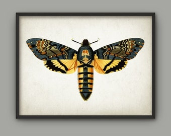 Vintage Moth Print - Vintage Moth Poster - Moth Book Plate Illustration - Entomology Poster - Insect - Biology - Hawk Moth Wall Art AB500