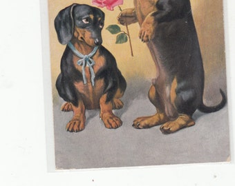 What He Did For Love Dachshund Offers A Rose To His Shy Sweetheart Doxie Postcard