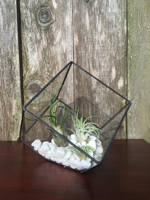 Geometric Black Cube Air Plant Terrarium Kit, Black Geometric Cube, White  Rocks