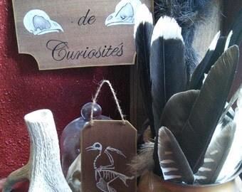 Interior Cabinet of curiosities #5 bird //squelette