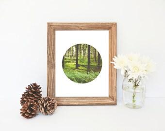 Nature Art, Trees, Landscape Photography, Forest Art, Forest Print, Nature Photography, Woodland Photo, Landscape, Printable Art, Wall Decor