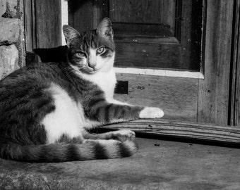 Cat on Window, photo, Feline, Fine Art Photography, Black and White, Portrait, Malta cat, Maltese cat, Wood, Windowsill, Calm, Relaxed,