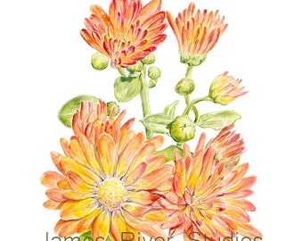 Chrysanthemum Art Chrysanthemum Print. Mums Watercolor Painting Mums Painting Mums Print Yellow Mums Orange Mums Wall Decor Mums Wall Art.