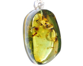 Amber Pendant Big Free Form Genuine Green Caribbean Amber Pendant With Natural Insecta Inclusions