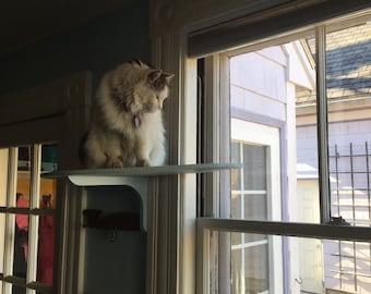 large window wrap around cat perch