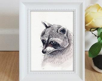 Raccoon Watercolor Illustration - Framed Original
