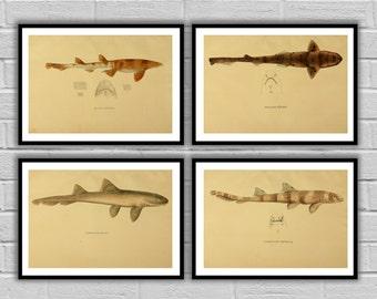 Shark Print set of 4, Nautical art print set, Ocean print, Natural History home decor, Shark wall art, Ocean Decor, fisherman gift, 101-104