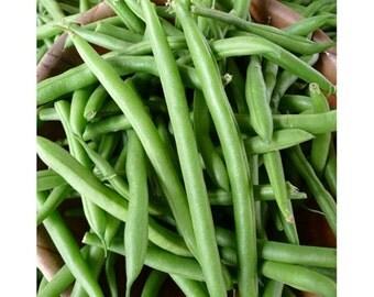 Half Runner Bean Seed, Heirloom, NON GMO, State Half Runner, 1 Lb., USA Grown