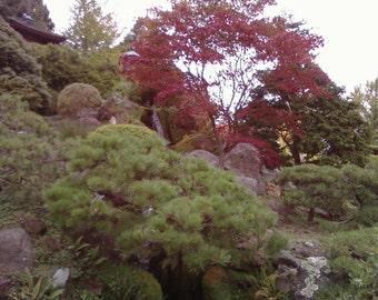 Nature Pic (Japanese Tea Garden)