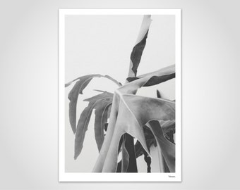 MONSTERA SOFT - art print, abstract posters, modern photography, Scandinavian design, minimalist, Plfanze, leaf, black, white