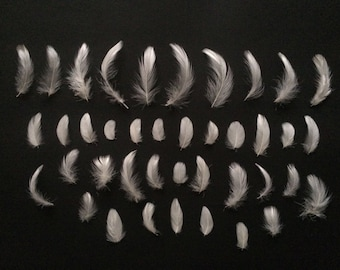 Natural White Craft Feathers 2 - 8cm Mixed Assorted Bag Small Lot Art Bird