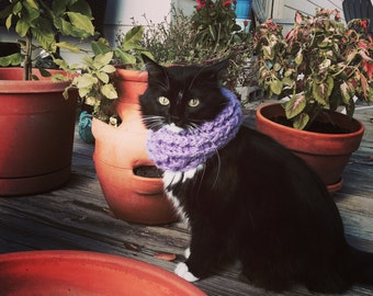 Infinity Cat Scarf