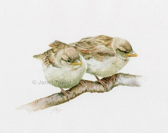 Sparrows painting -   Print of an original watercolour by Jan Taylor