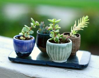 Baby succulent planters