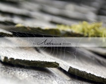 Spider Web on Old Shingles - Instant Art - Digital Download - Printable Image - Atlantic Canada Photography - Old Shed Spider Web Grey Green