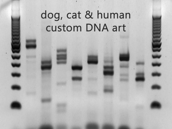 Dog cat people custom dna wall canvas black white metal by for Personalized dna art