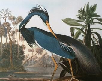 LOUISIANA HERON Large Original Vintage 1964  Audubon Print, 14 x 17 inches, Bird Decor, Vintage Decor, Ornithology