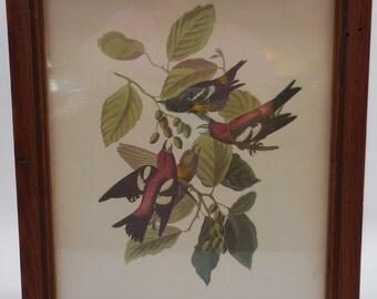 SALE!!!  Vintage Audubon Print Nice Frame!