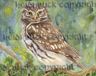 Little Owl Watercolour Print