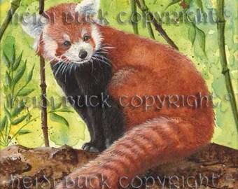Red Panda Watercolour Print
