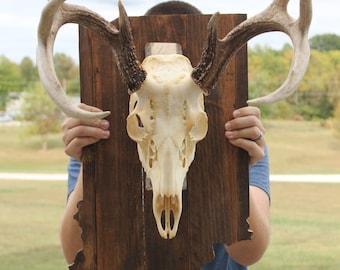 State Shaped Skull Mount, Wooden Skull Mount