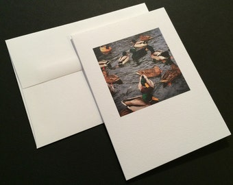 Mallards. Ducks. Blank Greeting Card. Note Card. Photo Card.
