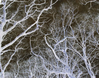 Nature In Negative Series // 'Woods' Photo Print