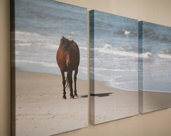 Pony on Assateague Island - Fine Art Photography Canvas, Nature and Landscapes, National Parks