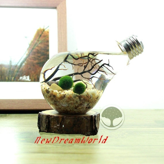 Gift Guide for Nature Lovers - International Shipping. Bulb aquarium with aquatic living marimo ball, river stone, sea fan, tabletop bulb terrarium-office desk decor, unique living nature gift.