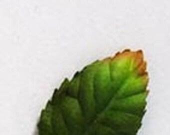 Leaves - Rose (Summer) 1.5