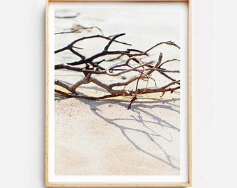 Beach Photography Print - Natural Objects II - Photographic Art, Beach Art Print,  Photographic Print, Beach Art Print, Photo Print