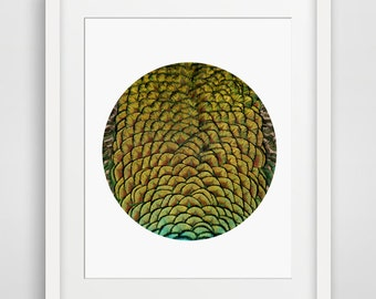 Feather Print, Abstract Art, Abstract Wall Art, Colorful Modern, Circle Photo Art, Peacock Feathers, Animal Print, Bird Art, Bird Lover Gift